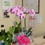 fiori per arredo